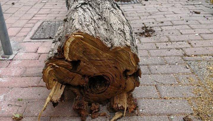 torrione albero