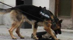 cane anti-droga